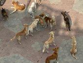 قارئ يشكو من انتشار الكلاب الضالة بمنطقة أرض الجمعية بمنطقة إمبابة
