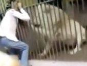 فيديو .. أسد ينهش ذراع حارسه بفى باكستان
