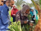 """""""الزراعة"""" تحدد توصيات لمزارع النخيل لمواجهة السوسة وزيادة إنتاج التمور"""