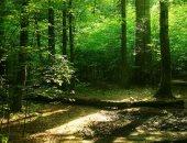 ثلث أشجار العالم معرضة للانقراض.. تقرير يؤكد: تقليص مساحة الغابات بنسبة 40٪.. و29 دولة تفقد 90٪ من أشجارها.. وخبراء يحذرون من نقص نسبة الأكسجين وتعميق أزمة المناخ.. والبرازيل لديها النصيب الأكبر