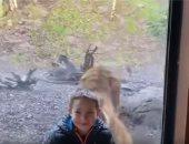 فيديو.. هجوم نمر على طفل بحديقة حيوان دبلن فى أيرلندا