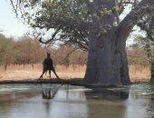 """شاهد.. حيوانات محمية """"بانديا"""" بالسنغال.. تضم تيمون وبومبا الحقيقين"""