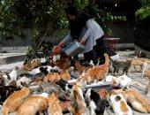 إندونيسية تحول منزلها إلى ملجأ لقطط الشوارع