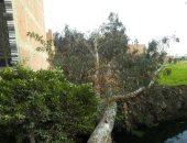 سقوط شجرة على سيارة ميكروباص وإصابة سائقها بقنا