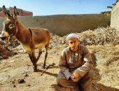 """فيديو وصور.. """"أحمد محمد"""" طالب من الشرقية يعمل حلاق حمير ليساعد والده على المعيشة"""