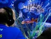 تأثيره لا يتوقف على البشر فقط..كيف تسبب كورونا في إصابة الأسماك بالاكتئاب؟
