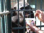 بليلة للشمبانزى وأرز بلبن للدب لحمايتهم من الصقيع بحديقة الحيوان.. صور
