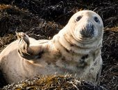 كيف أثر تقلب المناخ فى بريطانيا على الحياة البرية؟