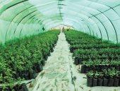 تعرف على المشروعات القومية الزراعية ودورها فى إحداث تنمية كبرى