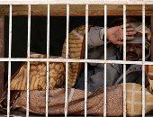 صور ..شباب فى اليمن يعانون أمراضا نفسية بسبب الحرب