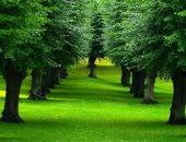 الاحتباس الحرارى يتسبب فى موت الأشجار بشكل أسرع