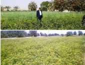 """""""زراعة الشيوخ"""": ارتفاع الصادرات الزراعية ترجمة لجودة الحاصلات وسلامة الإجراءات"""