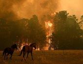 مسيرات حاشدة فى أستراليا احتجاجا على سياسة الحكومة حيال حرائق الغابات