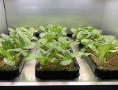 جهاز جديد يمكنك من زراعة 20 نوعا من الخضراوات داخل منزلك (صور)