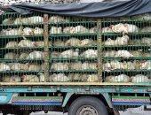 """الزراعة السعودية: بؤرة """"H5N8"""" المكتشفة بالرياض لا تشكل خطرا على الإنسان"""