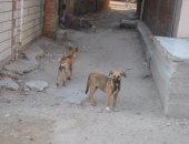 كلب مسعور يعقر 20 طفلا و6 مواطنين وتلقيهم العلاج بمستشفى أرمنت في الأقصر