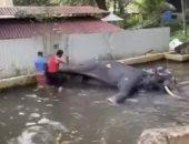 صرخة ألم.. رد فعل مؤلم من فيل يضربه حارسه بوحشية فى سريلانكا.. فيديو