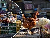 """""""الزراعة"""" تبدأ إجراءات عاجلة لمواجهة أنفلونزا الطيور.. الخدمات البيطرية: تحصين 2.2 مليون طائر.. وفحص جميع أنواع الدواجن قبل خروجها للسوق.. وتؤكد: المرض تحت السيطرة.. ونشر لجان تقصى وسحب عينات بمناطق مختلفة"""