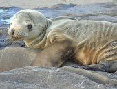 تغير المناخ يتسبب فى موت الحيوانات البحرية من الجوع.. اعرف التفاصيل