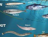 كيف سيؤثر تغير المناخ على توزيع الكائنات البحرية بحلول 2050