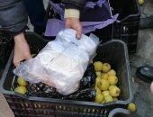 جمارك بورسعيد تحبط محاولة تهريب نصف طن حشيش داخل صناديق تفاح قادمة من سوريا