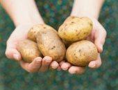 شعبة الخضراوات: سعر البطاطس يعود لأسعار التسعينات وتباع بـ2 جنيه