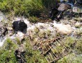 """""""سيبها علينا"""".. شكوى من انتشار القمامة والأوبئة بمجمع بمدينة السلام أول"""