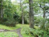 كم تحتاج بريطانيا من الأشجار للوصول لصافى انبعاثات الكربون 2050؟