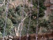 """""""سيبها علينا""""..  قارئ يشكو قطع وتقليم الأشجار بالطيران مدينة نصر"""
