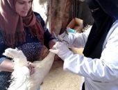 تحصين 21170 طائرا من الأمراض الوبائية بكفر الشيخ