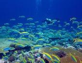 علماء يحذرون: تغير المناخ يتسبب فى انهيار التنوع البيولوجى