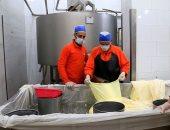 """عشاق الجبن الرومى.. شاهد مراحل صناعة """"ملكة السندوتشات"""""""