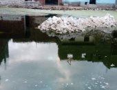 قارئ يشكو من استمرار تدفق المياه الجوفية بقرية الشرفا بمركز الصف