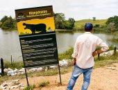 """أفراس النهر  لـ""""إسكوبار"""" تهدد المياه فى بحيرات بكولومبيا.. اعرف القصة"""
