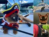 القطة ريجبى تسافر حول العالم باليخت ولها 42 ألف متابع بإنستجرام.. الدنيا حظوظ