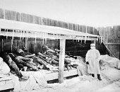 تاريخ الوباء.. طاعون يخرج من الصين ويقتل الملايين فى العالم منذ 165 عاما