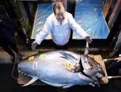 كلام ستات.. بيع سمكة تونة فى مزاد بـ 2 مليون دولار باليابان