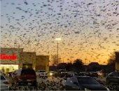 شاهد.. لحظة هجوم سرب طيور على مركز تسوق فى ولاية تكساس الأمريكية