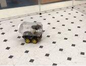 علماء يدربون فئران على قيادة السيارات بعد تحفيزها بالحلوى والألعاب.. فيديو
