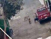 هجوم الكلاب الضالة على المارة.. شكوى سكان حى السهران بالحواميدية محافظة الجيزة
