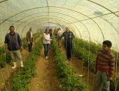 صور.. الزراعة: تكثيف المرور على صوب إنتاج الخضر وتقديم الدعم للمزارعين