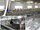 """""""الزراعة """" : احياء مشروعات الأرانب لزيادة اللحوم والاستثمار .. التوسع فى تراخيص المزارع و """"التصنيف """" تربية وتسمين لزيادة صادرات الفرو .هيئة الثروة الحيوانية : تحسن أوضاع المرأة الريفية وعودة للقرى المنتجة"""