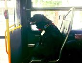 يا ترى بتروح فين.. الكلبة إكليبس تستقل الأتوبيس وحدها يوميا بواشنطن × 10 صور