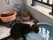 """""""القط العجوز"""" يخاطر بحياته لإنقاذ الحيوانات فى ووهان الصينية.. اعرف حكايته"""