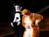 قطط على مسرح حفل الأوسكار ..أعرف القصة