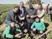 صور .. طلاب مدرسة موط الزراعية بالداخلة يحصدون محصول البطاطس بعد زراعتها بالمدرسة
