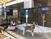 فيديو.. مطار يدلل الكلاب المسافرة بمرحاض خاص