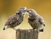 فى عيد الحب.. 7 صور توضح شعور رومانسية الحيوانات مثل البشر