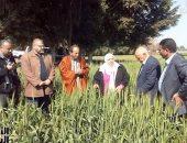 """""""الزراعة"""" تتابع القمح بالغربية.. وتؤكد: المحصول مبشر بالخير"""