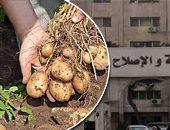 """""""الزراعة"""" توفد لجانا بغيطان البطاطس الصيفى لزيادة المعروض.. حزمة إجراءات لرفع إنتاجية المحصول لـ6 ملايين طن سنويا.. وتصدير أولى الشحنات لدولتى موريشيوس  والهند.. ومرور حقلى مستمر على الخضر لحل مشاكل الفلاحين"""